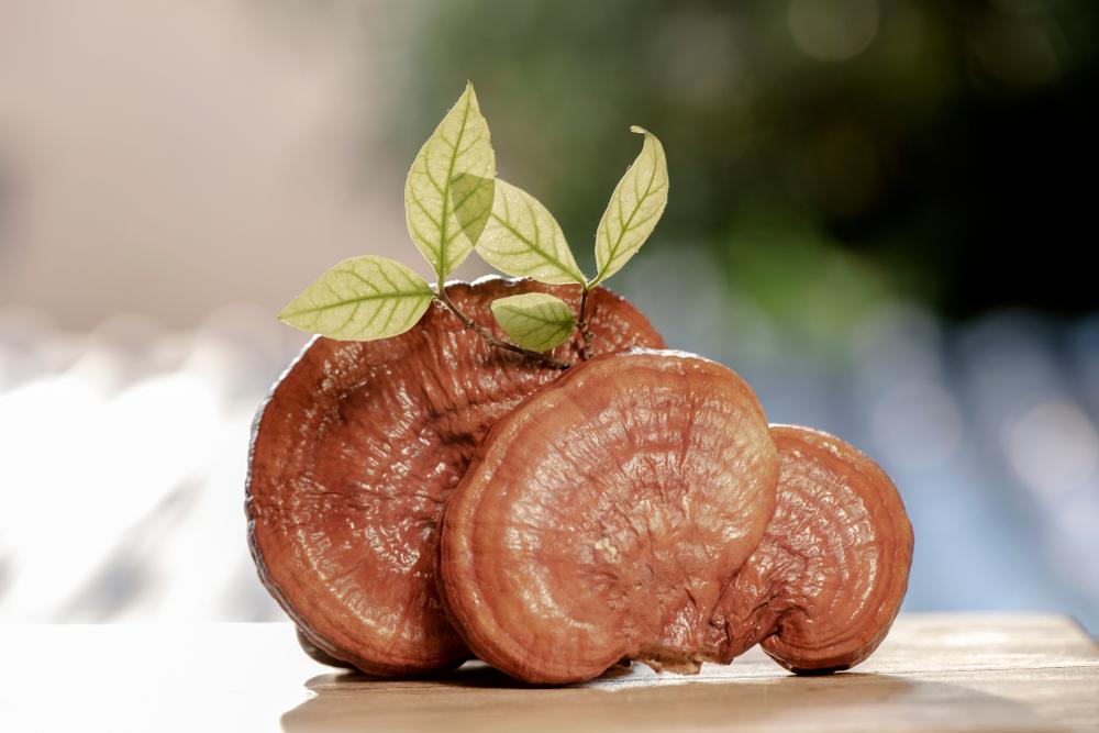 Ciuperca Reishi